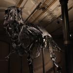 2016-03-19_022_Naturkundemuseum